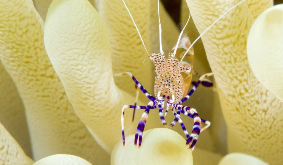 Het onderwaterparadijs op aarde