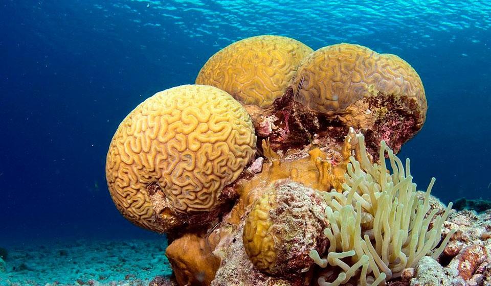 PADI Open Water Diver certificate