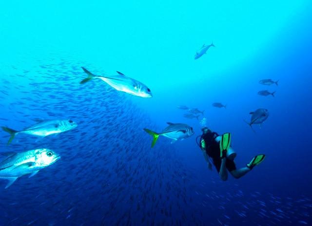 Underwater Navigator Cursus