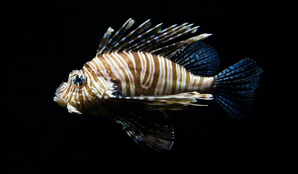 A Lionfish Hunting Course