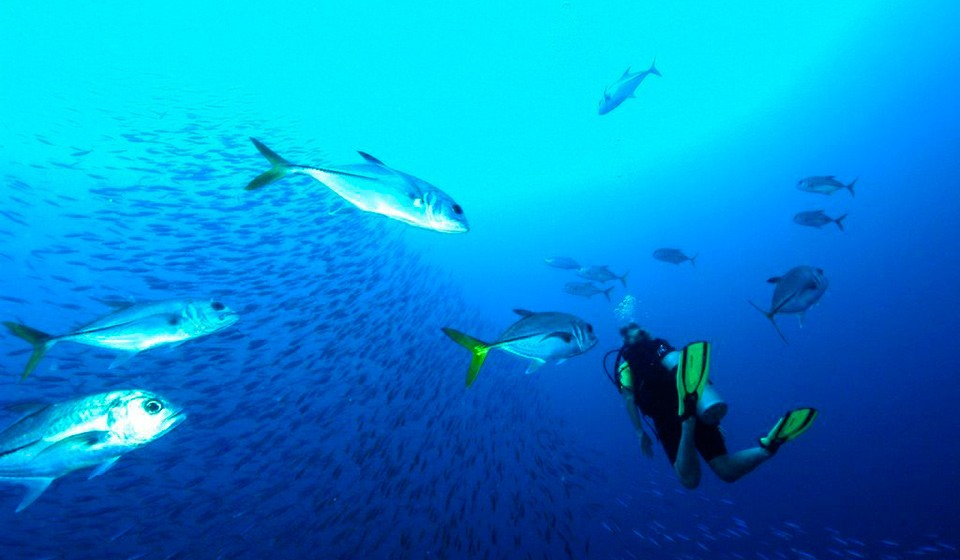 Become a OWSI at AB-Dive