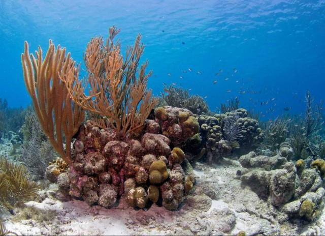 PADI Open Water Diver Course - Referral