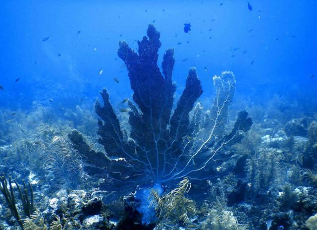 Wanneer is de beste tijd om te duiken op Bonaire?