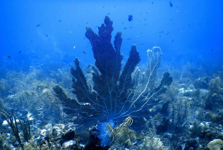 When is the best time to dive on Bonaire?