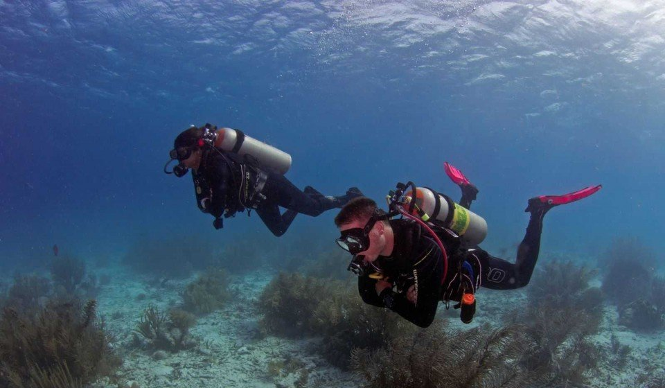 Diving for beginners and experts