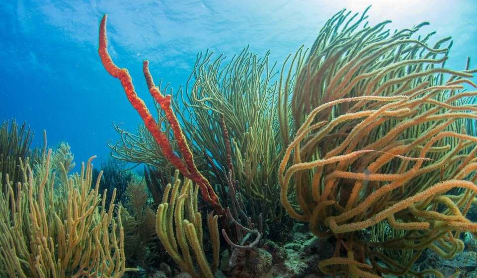 Bonaire duikspot 3: White Slave