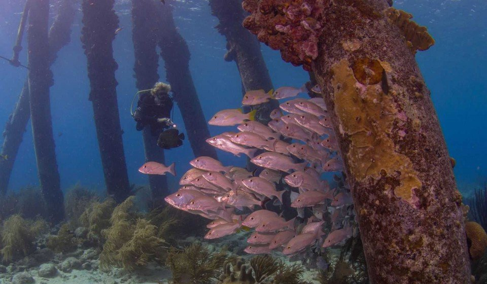Dive site 4: Salt Pier
