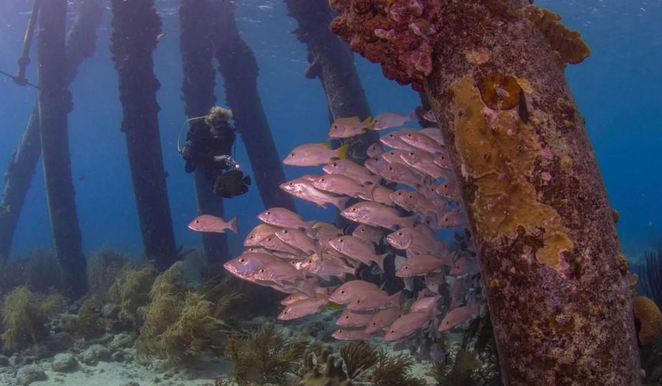 Bonaire duikspot 4: Zoutpier