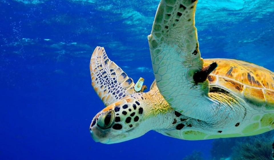 Bonaire duikspot 10: Lac Cai