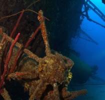 Wreck Diver Specialty