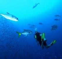 Onderwater Navigatie Specialty