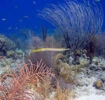 Upgrade Scuba Diver to Open Water Course