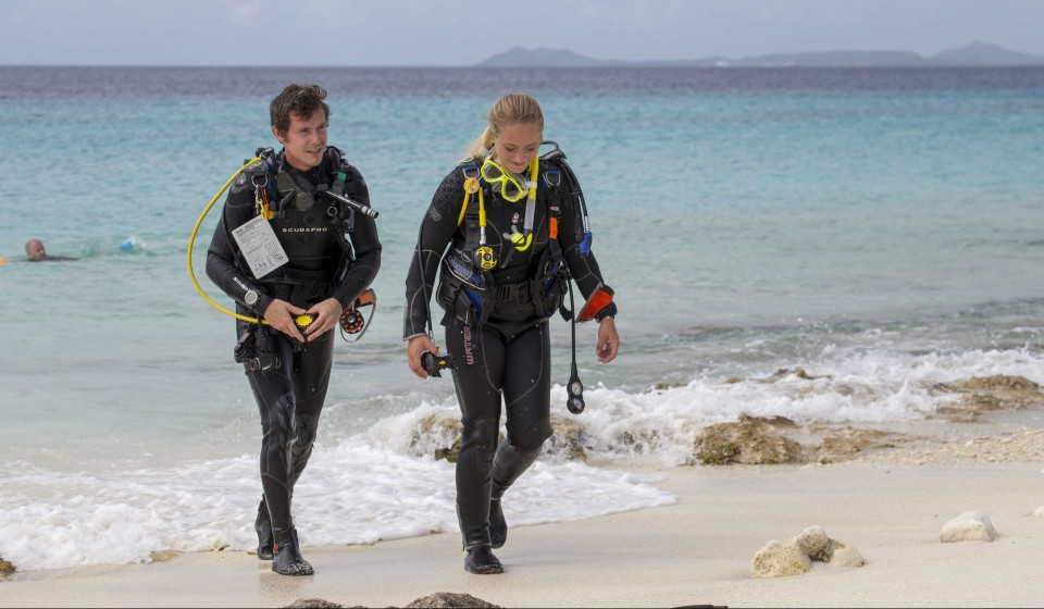 Gain diving experience